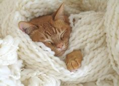 cuddling in yarn on a winter day..sweeet  ~a quieter storm