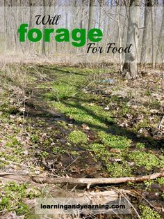Will Forage For Food - fantastic way to add nutrient-dense food to your diet. For free!