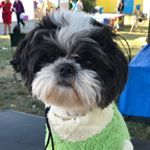 Are you on Instagram? Make sure follow @SkaterShihTzu. Watch this little guy take on the dog sports world and catch a little air time on his board!