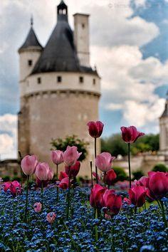 Castle & Tulips, Château de Chenonceau in Indre-et-Loire, France