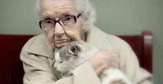 15 imágenes de gatos adultos adoptados por personas con un gran corazón