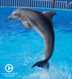 Hope the dolphin flying through the air back when she was just a calf!