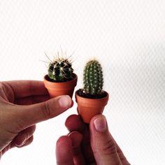 Mini cactus.