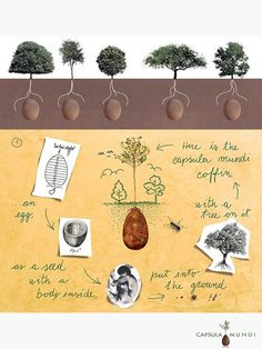 Capsula Mundi: become a tree and go back to the cycle of life #afterdeath #GreenBurial #dying