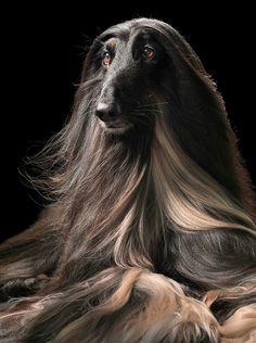 la muda del pelo en el perro