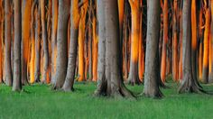 Nienhagen Wood in Mecklenburg-Vorpommern, Germany (© Radius Images/Alamy)-Germany-STORY-Hulutrip