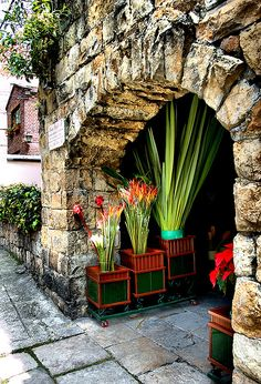 flower shop, set into the wall below a castle in Bogota, Columbia Exotic Flowers, Beautiful Flowers, Beautiful Places, Belle France, Shop Facade, Flowers For Sale, Provence France, Shop Fronts, Ansel Adams
