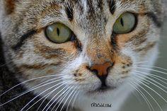 AL- BAHA, SA  By A Nikon D600  instagram.com/adelhilalh0   Love Cute Animals