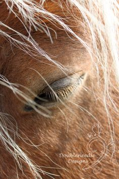 Horse Photography One 8 x 10 Digital Print by doubleneedledesigns, $25.00