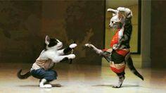 Katy cat :))