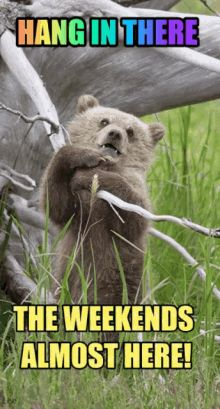 """55 """"Almost Friday"""" Memes - """"Hang in there, the weekends almost here!"""" Weekend Meme, Weekend Quotes, Its Friday Quotes, Friday Humor, Weekend Is Coming, Almost Weekend, Almost Friday, Friday Jr, Tomorrow Is Friday"""