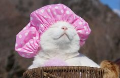 Shiro Neko, The Most Relaxed Cat On Earth, Has Passed Away At Age 18 💔 You'll always be missed, and never forgotten, Shiro. 💔 Photos by Shiro Cool Cats, I Love Cats, Funny Cats, Funny Animals, Cute Animals, Crazy Cat Lady, Crazy Cats, Costume Chat, Cat Hat