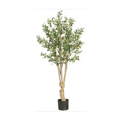 Olive Silk Tree - 5 Feet Tall * Read more reviews of the product by visiting the link on the image.