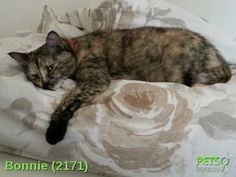 Please help us find Bonnie the Cat missing in the BA13 area. For more details click http://j.mp/1tALQUo