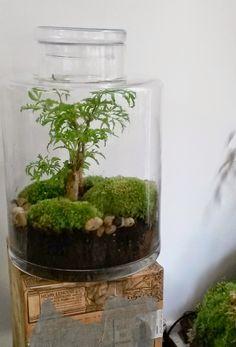 L'Art de la Curiosité Classic: La plante parfaite