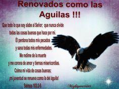 JESUS PODEROSO GUERRERO: Salmos 103: 2-5 = Renovados como las Águilas !