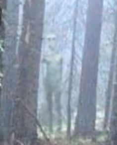 Zoomed image of giant, gray humanoid-like alien photographed in Bulgarian forest