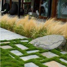 no mow grass
