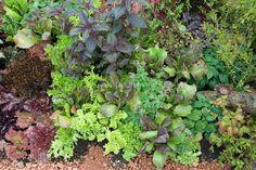 perennial vegetable garden plans - Google Търсене