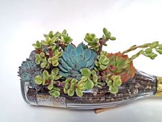 #winebottle succulent planter makes for an amazing #gift   Get  yours handmade from lookingsharpcactus.com  #lookingsharpcactus #bottlegarden #bottlegardens #wine #winelover #winegift #winelovergift  #winebottle #winebottles #winebottledecor  #winebottlegarden #cutwinebottle #succulent #succulents #succulentplants #succulentarrangement #garden #planters #bottledecor  #indoorplants #upcycled #dishgarden #SucculentPlanter#Christmasgifts #christmasgiftsideas #christmasgiftforher