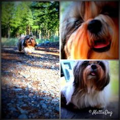 My PR release for: MattieDog Reviews #CHIforDogs! I gots a great PR team - dey help me out tons!