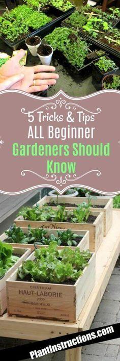 Tricks for Beginner Gardeners #gardeningforbeginners