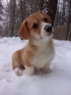 A little dog sitting in the snow…
