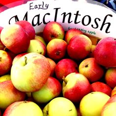 McIntosh apples are vivid red brushed with bright green, oftentimes speckled with white lenticels (spots). The amount of red or green on the skin of the McIntosh...