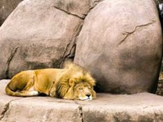 Indira Gandhi Zoological Park in Visakapatnam, Andhra Pradesh, India