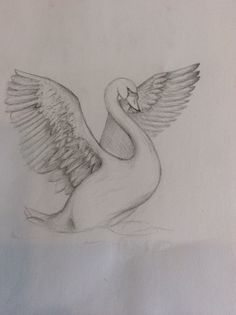 A small sketch I sent to my great Aunt. Animal Sketches Easy, Animal Drawings, Art Drawings Sketches, Easy Drawings, Black Swan Animal, Swan Drawing, Drawing Art, Swan Tattoo, Eagle Drawing