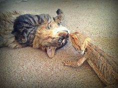 14 Cats Who Are Randomly Friends With Lizards