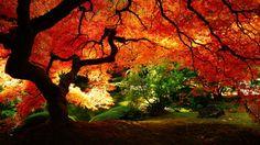 fall scenery desktop wallpaper