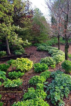 Hosta Woodland Garden ,I love hostas Lawn And Garden, Garden Paths, Outdoor Plants, Outdoor Gardens, Landscape Design, Garden Design, Hosta Gardens, Woodland Garden, Glass Garden