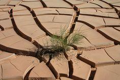 Sol asséché Sahara, Bechar, Algérie © All Rights Reserved by Salamani