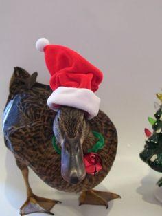 Hilarious Holiday Pets