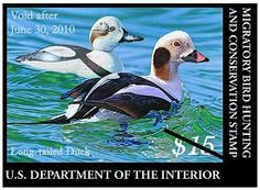 Federal Duck Stamp - U.S. Fish and Wildlife Service
