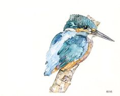 """Kingfisher Painting - Print from Original Watercolor Painting, """"The Fish King"""", Bird, Blue on Etsy, $12.00"""