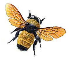 http://static.tumblr.com/bco4r5n/j3xm7n4dy/bumble_bee.jpg