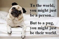 So want a pug cause it would be my world! Love them so much!
