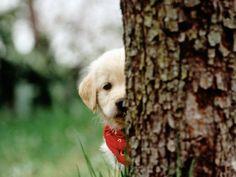Peek -a-boo