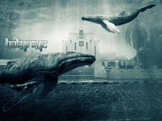 dunia bawah air