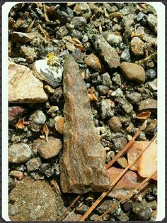 In situ, east Texas petrified wood drill.