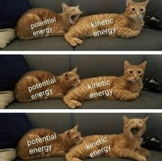 """Eighteen Quark-y Physics Memes For The Nerds - Funny memes that """"GET IT"""" and want you to too. Get the latest funniest memes and keep up what is going on in the meme-o-sphere. Funny Animal Memes, Cute Funny Animals, Funny Relatable Memes, Cat Memes, Dankest Memes, Funny Jokes, Hilarious, Funny Cute, Cats Humor"""