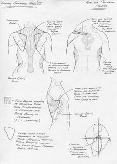 Interesting sketches looking at how the body interacts with garments