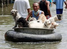 Saving dogs in Thailand