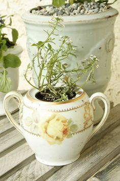 using old crockery as planters? adorable!
