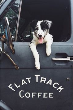 Really cute border collie! puppy coffee truck