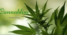 Cannabliss Consulting Firm