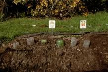 How start the garden in the right way healthy, happy plants