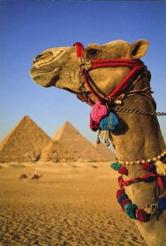 Egypt what a magical place!! Please find peace I really want to see this!
